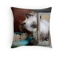 Is Anybody Out There? Throw Pillow