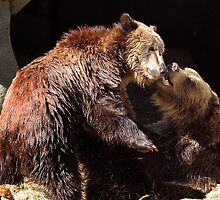 Grizzly Bear Wrestling Match by Ann  Van Breemen