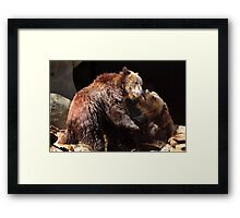 Grizzly Bear Wrestling Match Framed Print