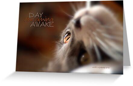 Day Dreaming Awake © Vicki Ferrari Photography by Vicki Ferrari