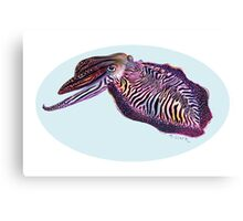 Common Cuttlefish (Sepia officinalis) Canvas Print