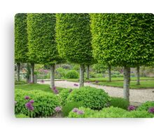 Avenue of topiary Canvas Print
