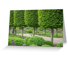 Avenue of topiary Greeting Card