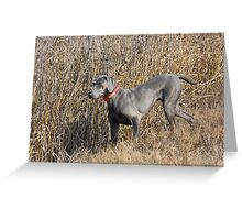 Weimaraner in Field Greeting Card