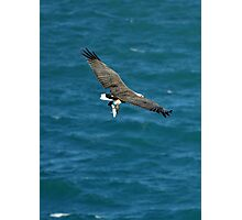 White-bellied Sea Eagle with a Trevally for Dinner Photographic Print