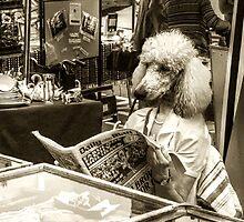 News Hound by Nigel Finn