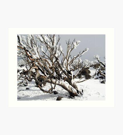 Snowgums 4 Art Print