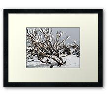 Snowgums 4 Framed Print