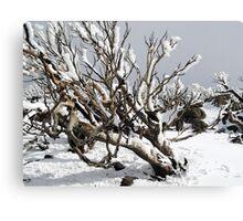 Snowgums 4 Canvas Print
