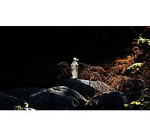 Bottle on a stone wall Photographic Print