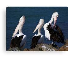A --------- of Pelicans Canvas Print