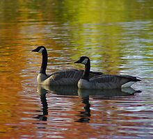 Canada Geese - Kathryn Albertson Park by Rich Summers