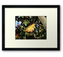 Autumn - yellow leaf, Burntisland 2009 Framed Print
