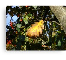 Autumn - yellow leaf, Burntisland 2009 Canvas Print