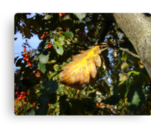 Autumn - yellow leaf, Burntisland 2009 Canvas Print