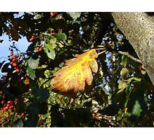 Autumn - yellow leaf, Burntisland 2009 Photographic Print