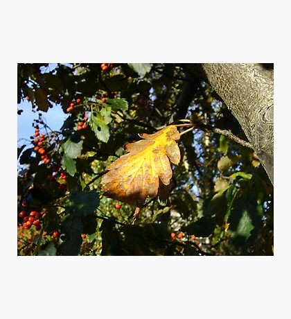 Autumn - yellow leaf, Burntisland 2009 Photographic Print