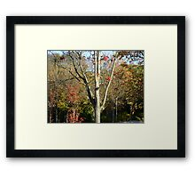 Autumn herald - tree & berries, Burntisland 2009 Framed Print