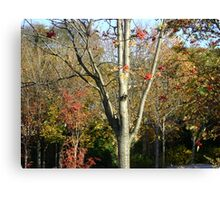 Autumn herald - tree & berries, Burntisland 2009 Canvas Print