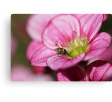 Little bug drinking Canvas Print
