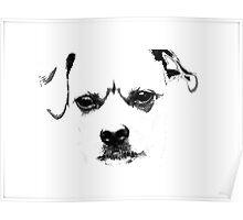 Misty Dog Poster