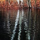 Still More Swamp Beauty by Nazareth