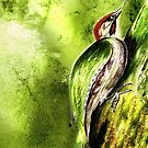 Green Woodpecker by Angela  Burman