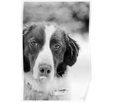 Ben, Sprollie (Black and White) Poster