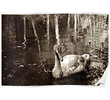 Sepia swan Poster