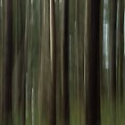 Forest Blur by Anne McKinnell