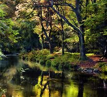 Autumnal River Teign, Devon by Squealia