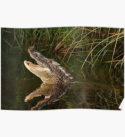 Happy Gator Poster