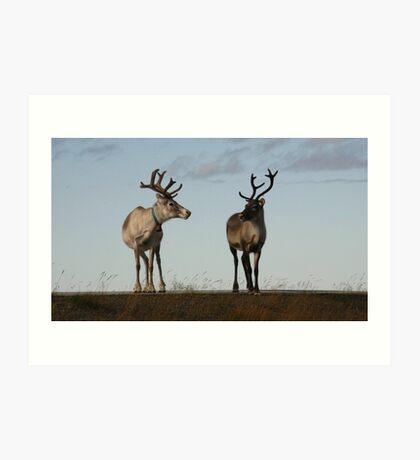 Arctic Circle, Norway Art Print