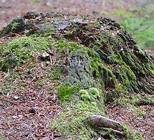 Mossy Stump by pyettphoto