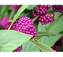 Mother Nature's Beauty Berries Photographic Print