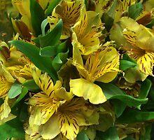 Yellow Iris Flower Bouquet by silverdragon
