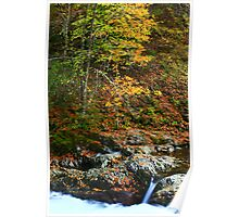 AUTUMN,MIDDLE PRONG LITTLE RIVER Poster