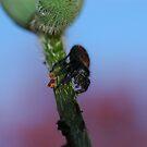 Itsy bitsy spider... by LOJOHA