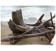 Driftwood At Point Pelee Poster