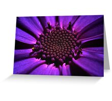 Purple summer flower macro Greeting Card