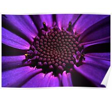 Purple summer flower macro Poster