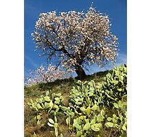 Almonds in the Alpujarras, Spain Photographic Print