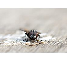 fly frontal Photographic Print