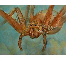 Fido-Hawaiian Cane Spider Photographic Print