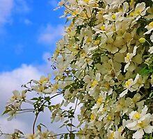 The Flower Wall by Eileen McVey