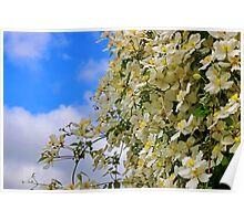 The Flower Wall Poster