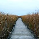 Tranquillity in cattails by tanmari