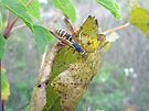 Predatory Wasp Hunts Spider by MotherNature