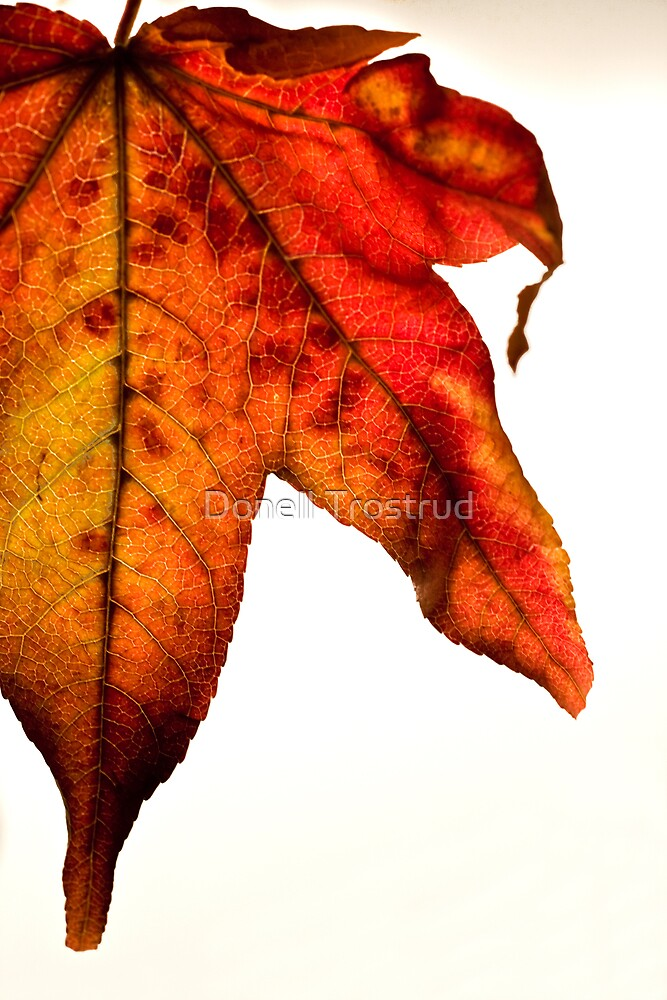 Fall for me by Donell Trostrud