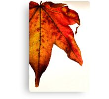 Fall for me Canvas Print